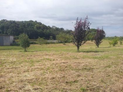 Linda área de terras produzindo totalmente plana com 4 hectares escriturada e toda trabalhada. IDEAL PARA SITIO, LOTEAMENTO OU INVESTIMENTO TURISTICO (HOTEL FAZENDA)... CONFIRA