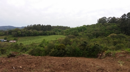 Área de terras com 06 hectare, sendo 110m de frente para a RS 444. Passa um arroio logo na entrada da área,  aproximadamente  02 hectares de parreiras.  POSSUI ESCRITURA.