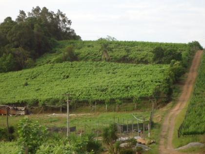 3 hectáres de terra produtiva (várias espécies de uva). No coração do Vale dos Vinhedos!