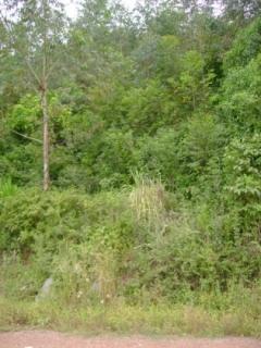 Área de terras medindo 2 hectares, localizada na Linha Ferri. Possui  luz, água e plantação de eucaliptos, própria para Sitio.